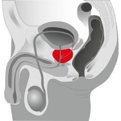 Masażer męskiej prostaty z wibracjami Twister